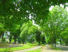 イメージ画像(駒沢公園)